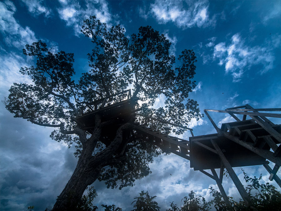 Heath River Wildlife Center Canopy