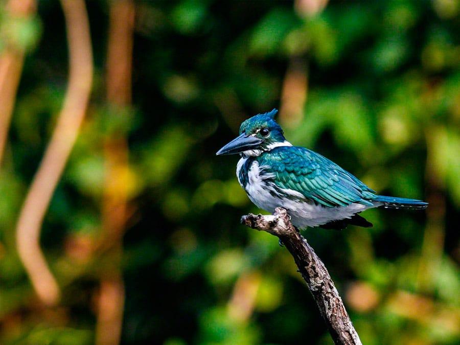 Cristalino Lodge Birds