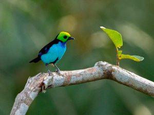 Cristalino Lodge Birding