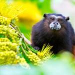 Posada Amazonas Lodge Monkey