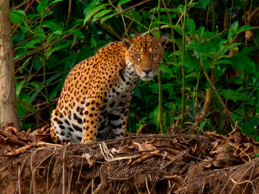 Top Tours for Tambopata Wildlife