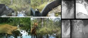 Heath Cameras
