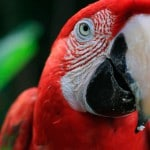 Serere Lodge Parrot