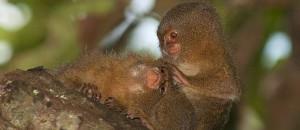 Tahuayo Monkeys
