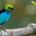 Cristalino Birds