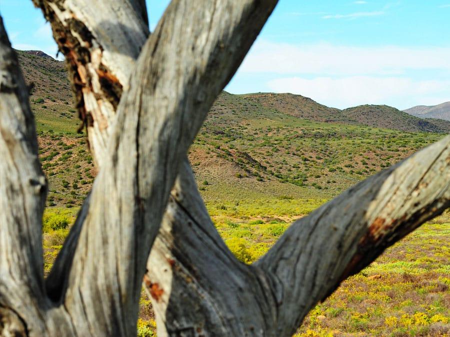 Sanbona Reserve