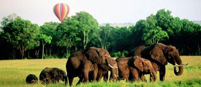 BalloonElephant