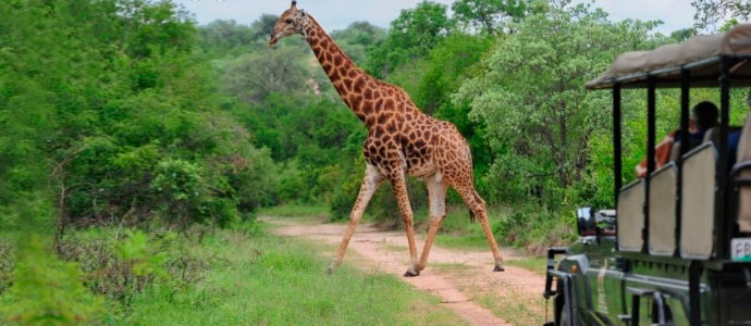 Top 9 African Savanna Tours