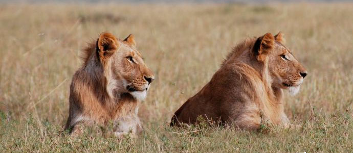 4 Top Masai Mara Safari Camps