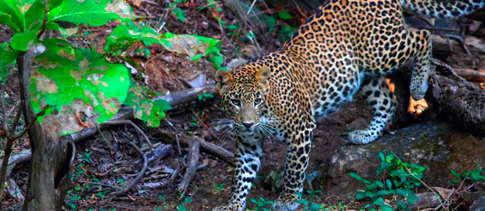 Wildlife lodges in India