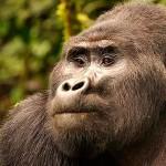 Kisoro Gorilla Tours