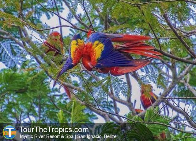 Macaws Mystic River Resort Spa