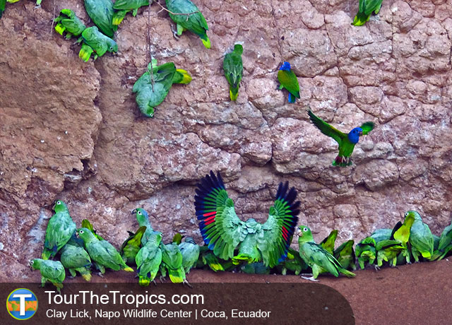 Top 3 Luxury Amazon Tours in Ecuador