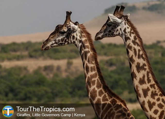 The Top 25 Tourist Attractions in Kenya