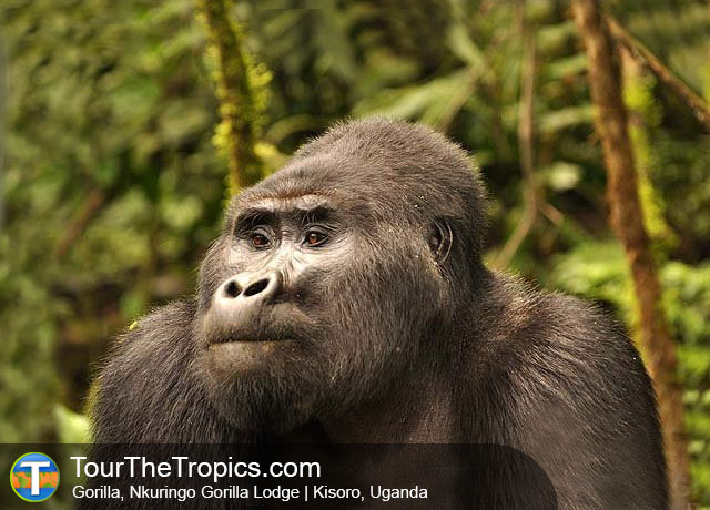Top 20 Tourist Attractions in Uganda
