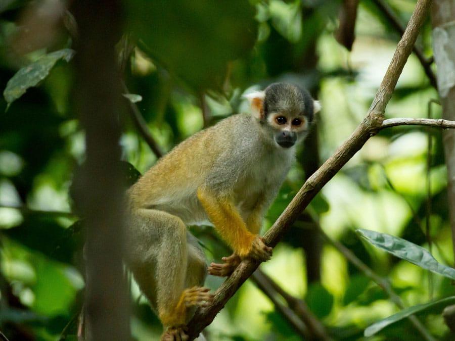 Tahuayo Lodge Amazon Wildlife