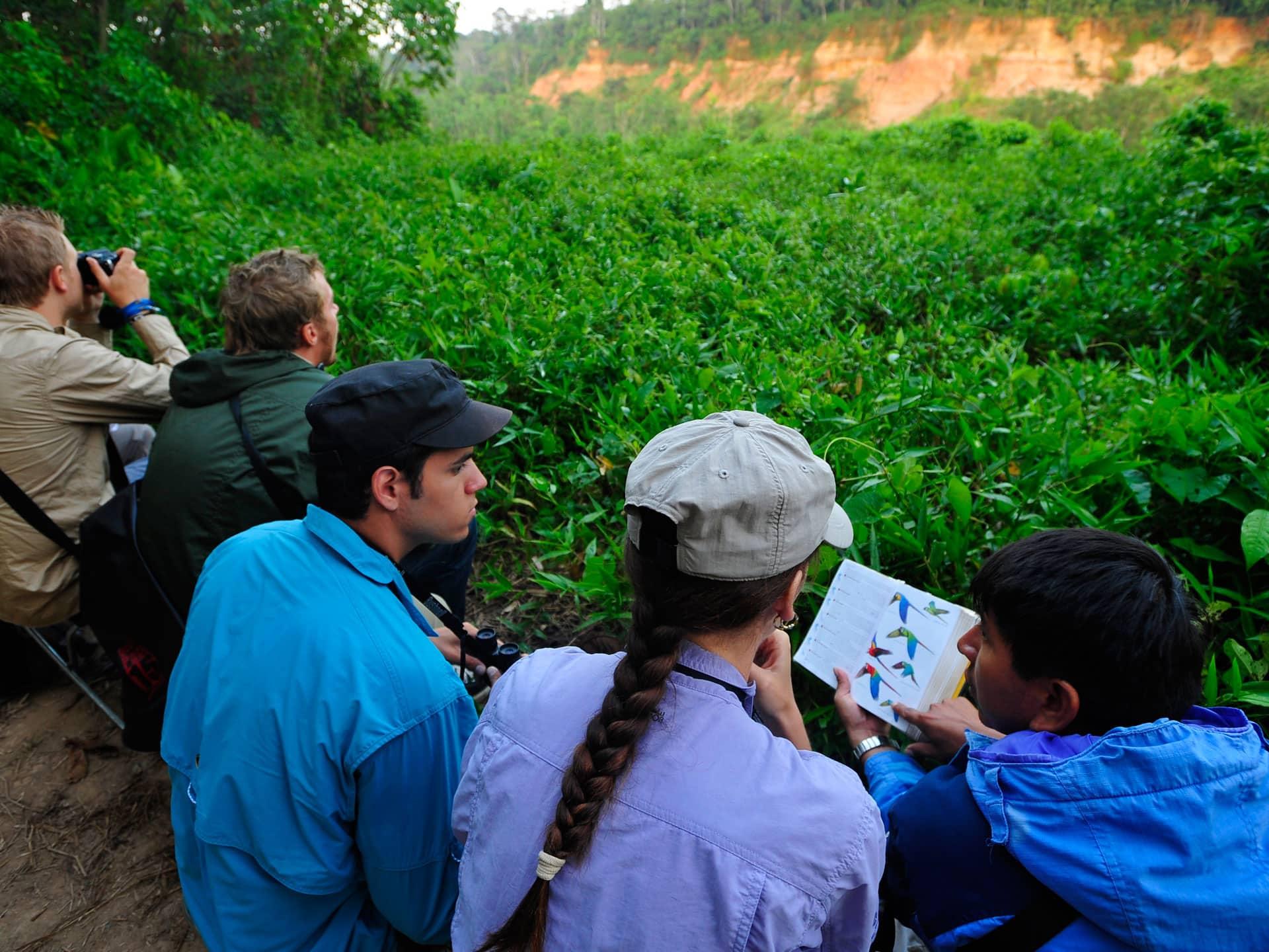 Tambopata Amazon Tour - Macaw Clay Lick