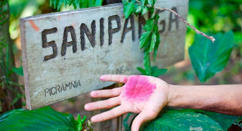 Ethnobotanical Trail - Posada Amazonas