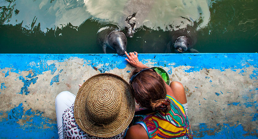 Manatee Rescue Center - Things to do in Peru