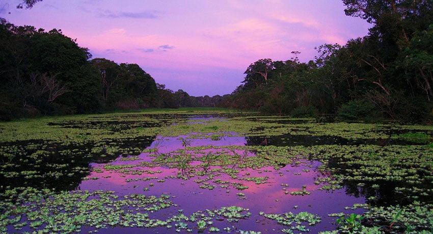 The Pacaya Samiria National Reserve