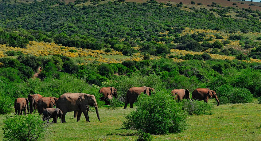 Shamwari Reserve or Addo Elephant National Park: The differences for a safari