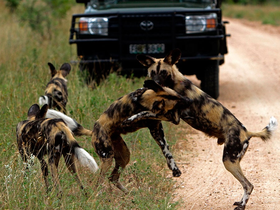 Jock Safari - Kruger National Park