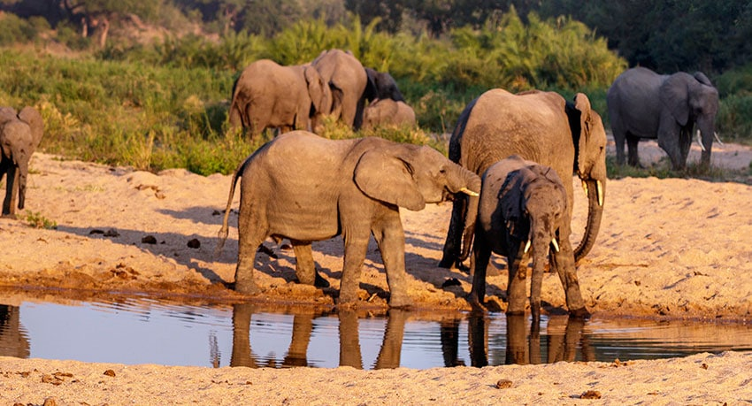 Kruger National Park - Elephants