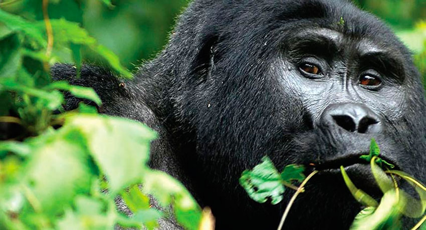The Top Bwindi Impenetrable National Park Tours