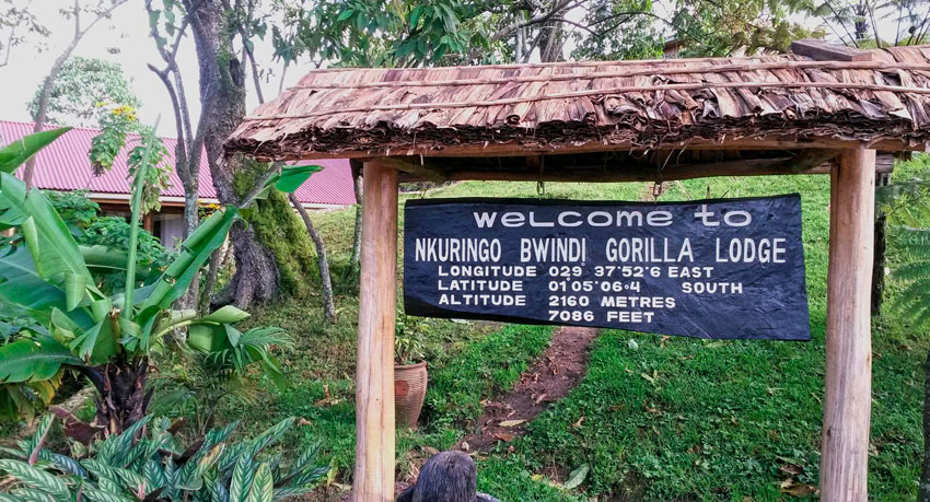 Nkuringo Gorilla Lodge