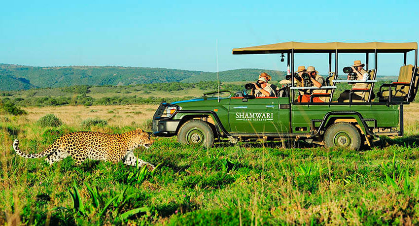 The Sanbona or Shamwari Wildlife Reserve?