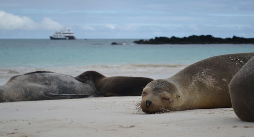 Sealions - Galapagos Islands, South America