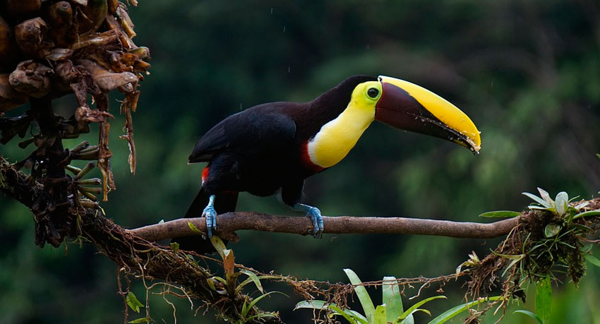 The Top 10 Rainforest Tours in Costa Rica