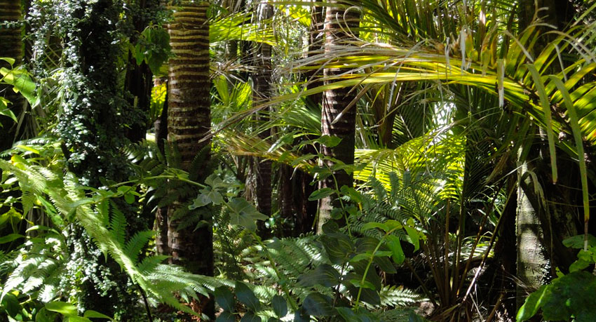 The Top 10 Rainforest Tours in Belize