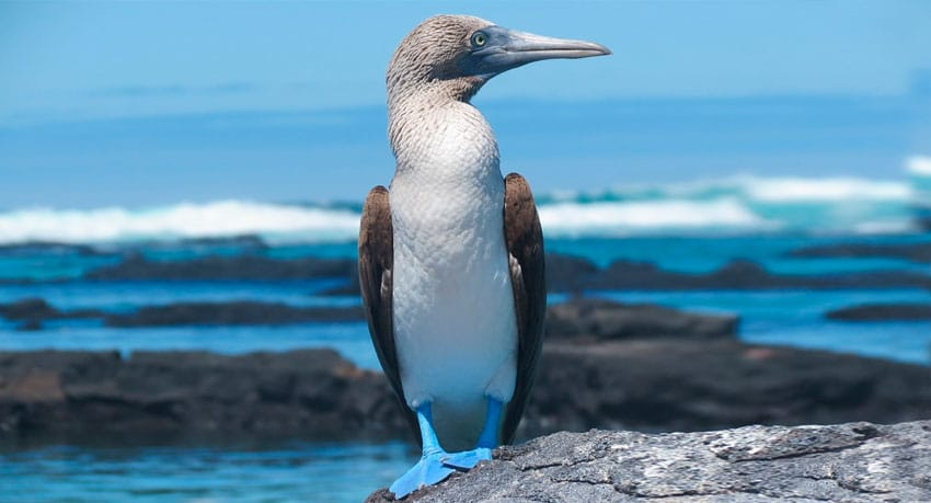 The 10 Best Galapagos Islands