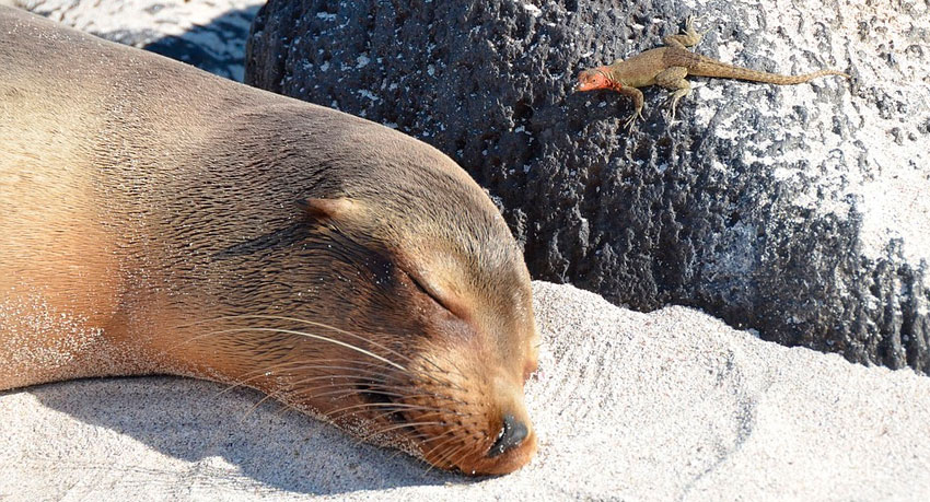 The Top 5-Day Galapagos Tours