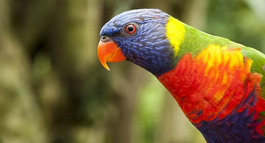 Australia Wildlife Tours