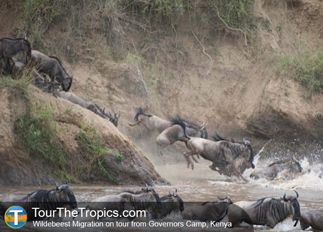 Great Migration - Things To Do On The Masai Mara