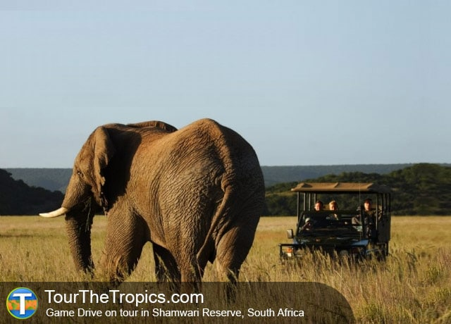 Elephants in Shamwari Reserve, South Africa