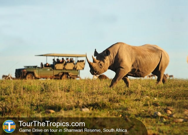Rhino in Shamwari Reserve, South Africa