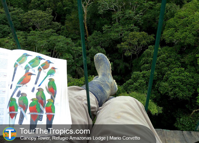 Canopy Tower - Tambopata Rainforest