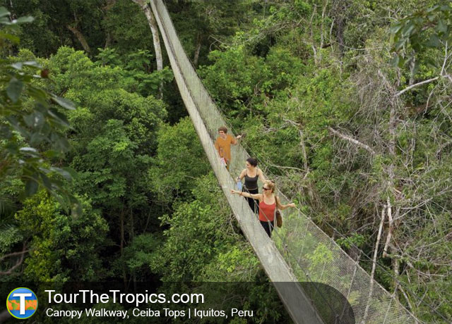 Canopy Walkway - Top Things to do in Iquitos