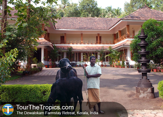 The Dewalokam Farmstay Retreat, South India