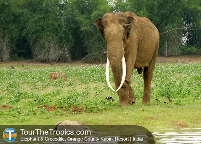 Elephant, Orange County Kabini