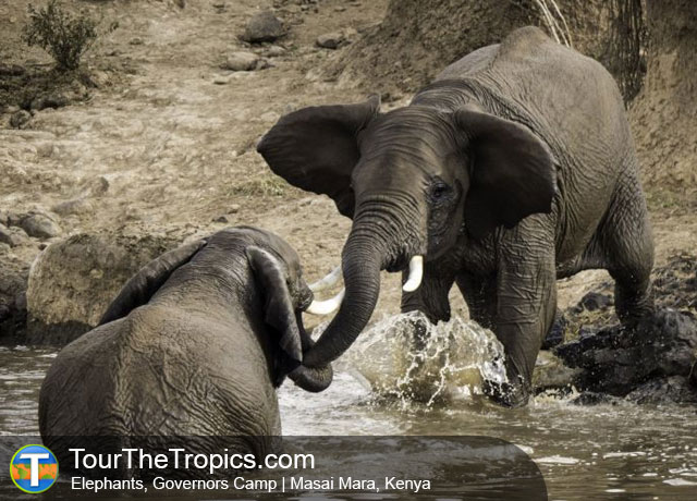 Elephants - Wildlife Sightings in the Tropics