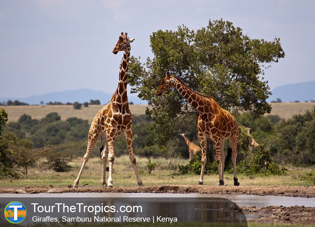 Samburu National Reserve - Top Tourist Attractions in Kenya