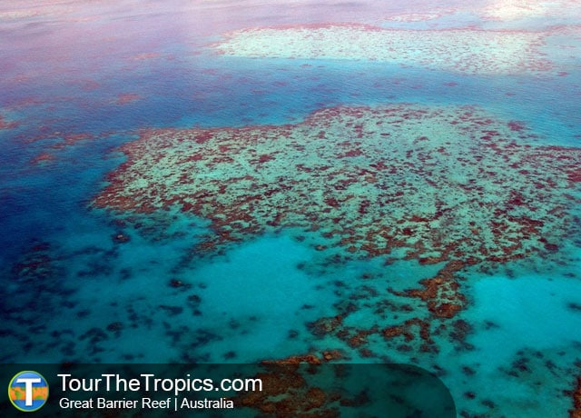 Great Barrier Reef - Wildlife Sightings in the Tropics