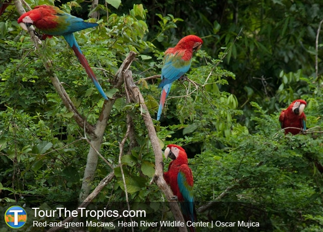 Heath River Wildlife Center Macaws, Puerto Maldonado, Peru