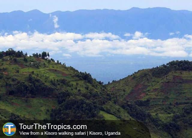 Walking Safari, Kisoro, Uganda - Tourist Attractions in Uganda