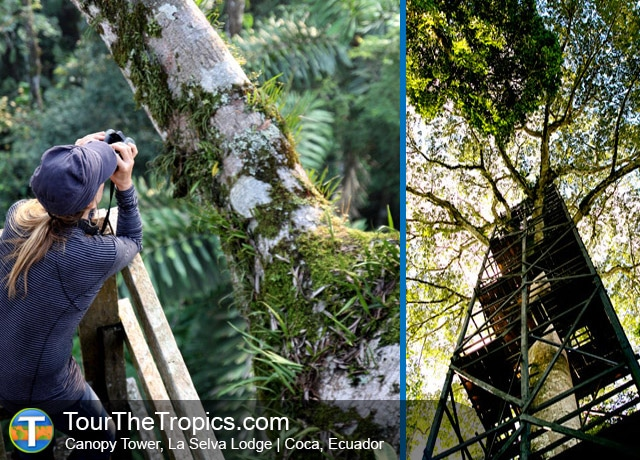 La Selva Lodge Tower - Things do to in the Amazon Rainforest