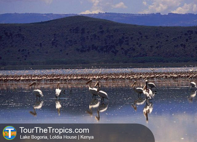 Lake Bogoria - Top 10 Things to do in the Great Rift Valley
